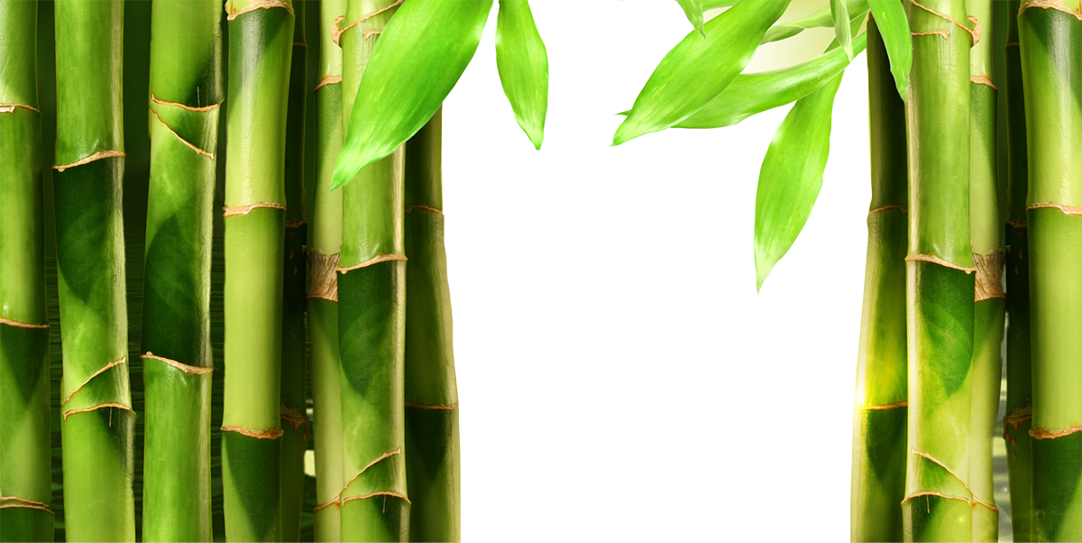 data/banners/layers/bamboo/hamel15.png